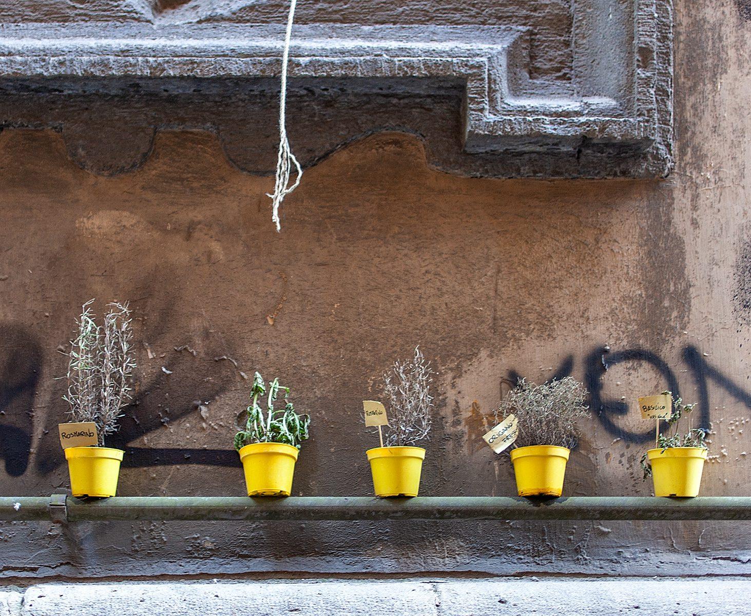 Blumentöpfe mit Küchenkräutern